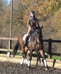 Lessons winter 2017-18 with advanced dressage horse 3