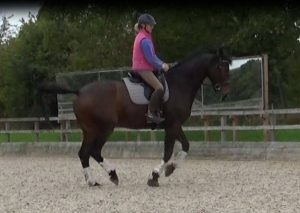 Lessons winter 2017-18 with advanced dressage horse