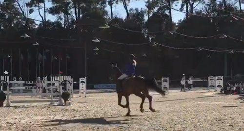 Anna show jumping
