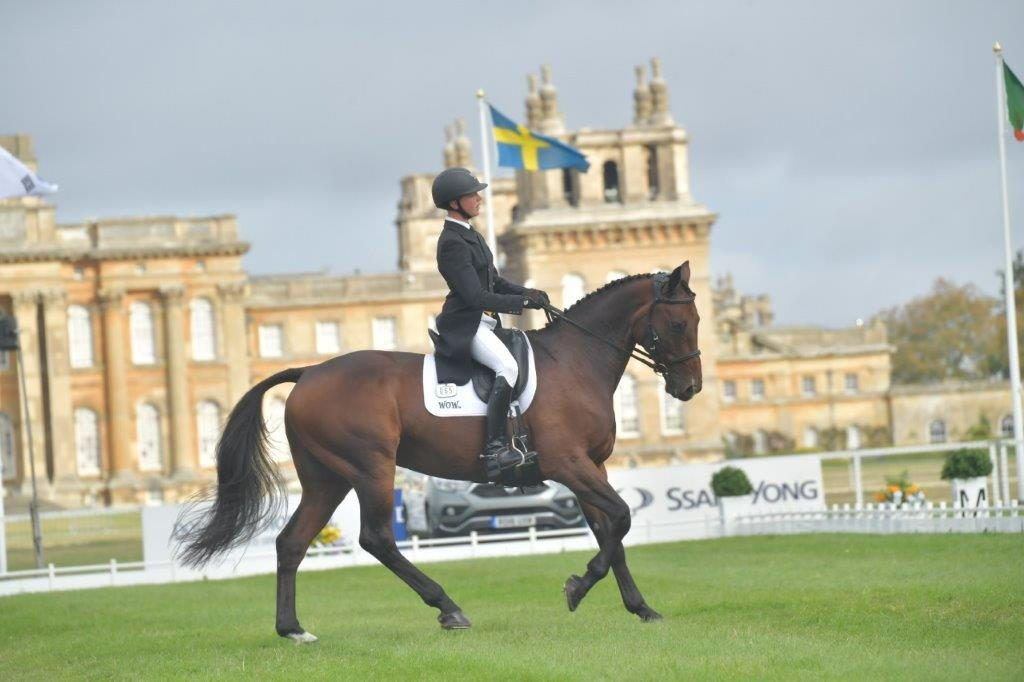 David At Blenheim 2018 8