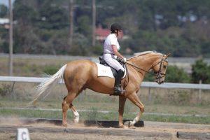 Debbie Dixon using her WOW saddle